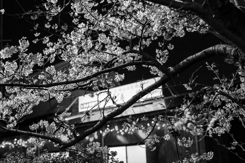 2014-04-07_sakura-05.jpg