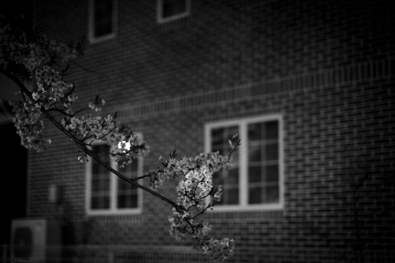 2014-04-07_sakura-06.jpg
