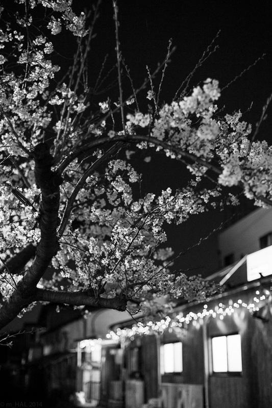 2014-04-07_sakura-07.jpg