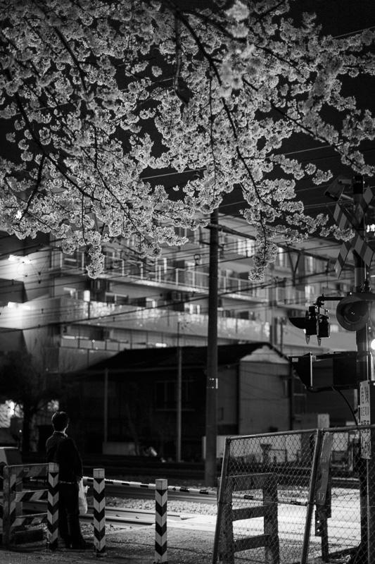 2014-04-07_sakura-08.jpg