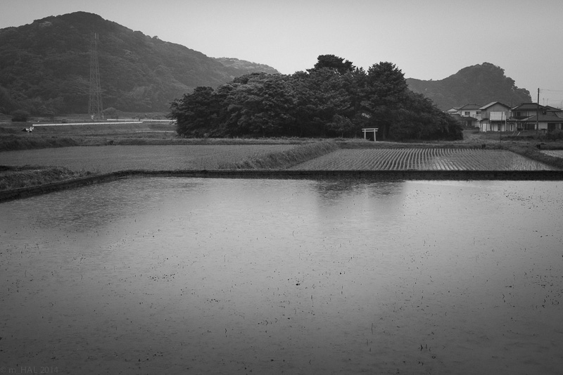 20140525_rainny-days-01.jpg
