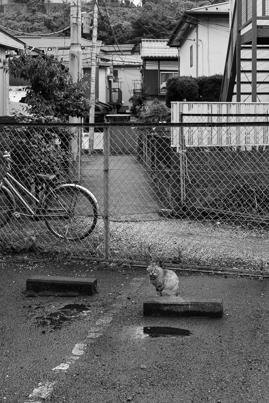 20140720_rainydays-02.jpg