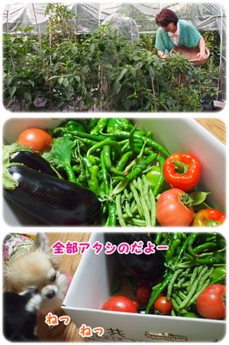 ツルちゃん菜園