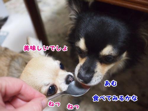 P8051149-1.jpg