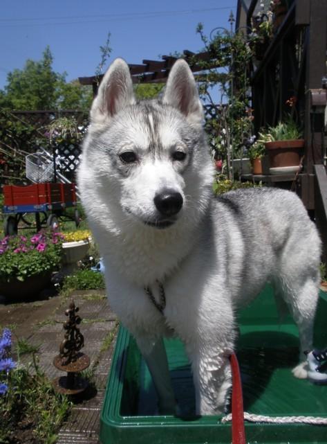 犬姫猫殿日記