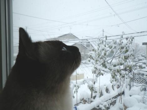 $犬姫猫殿日記