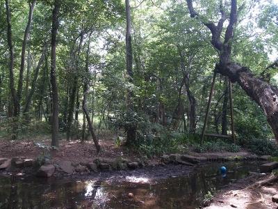 林試の森1