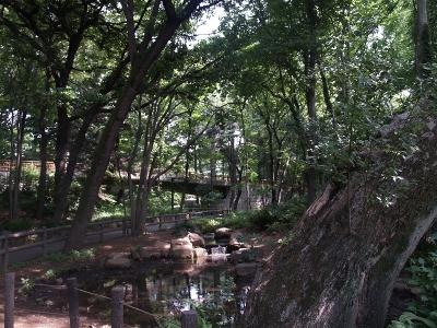林試の森3