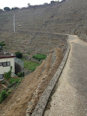 石垣段々畑