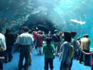 品川エプソン水族館1