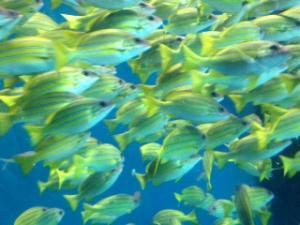 品川エプソン水族館4