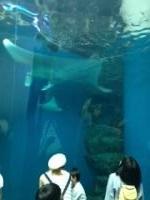 品川エプソン水族館5