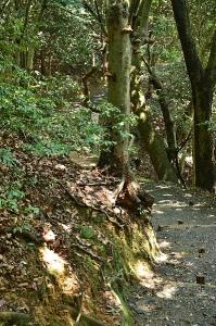 岩国城への道