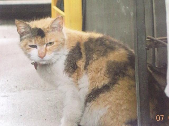 北村さん保護猫1