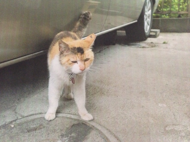 北村さん保護猫2