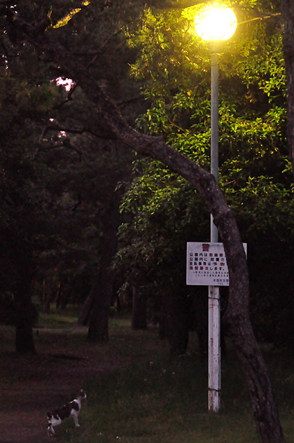 薄暮の公園猫