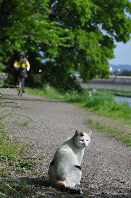 三毛猫と人