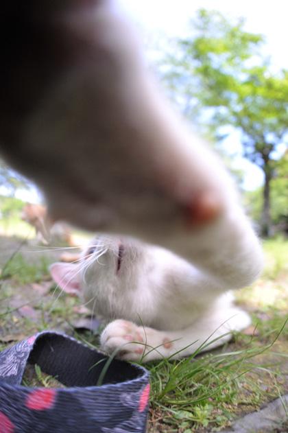 強烈猫パンチ!!