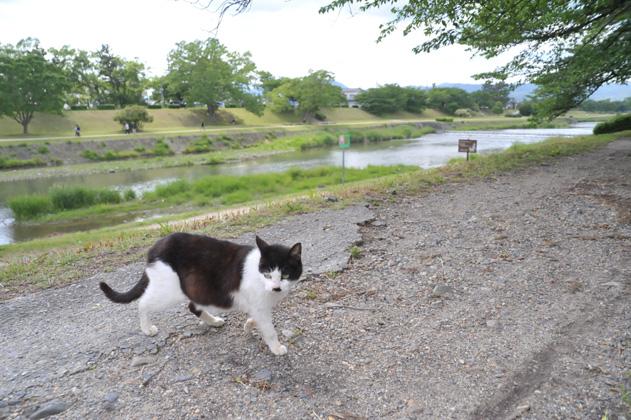 河川敷にて/黒白猫