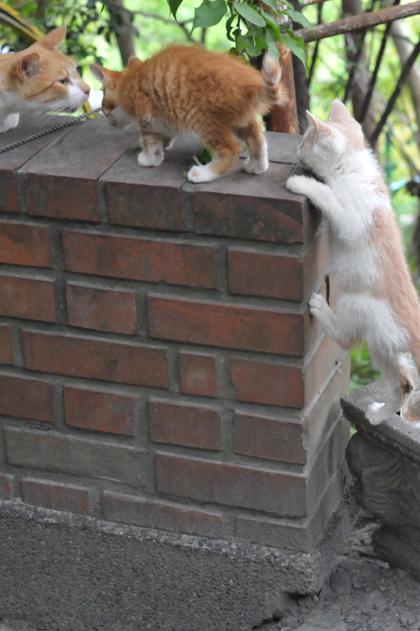 塀の上は。。
