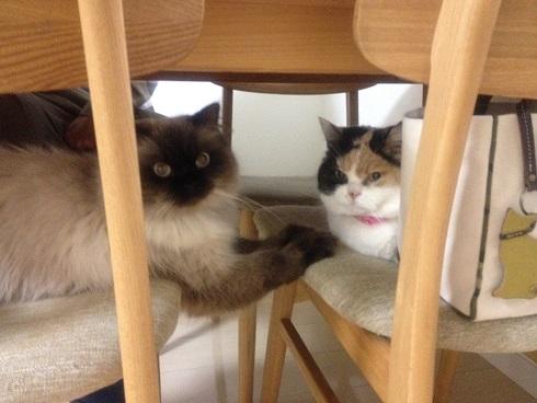 机の下のそらまめ1