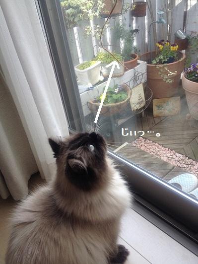 窓の外を見てるわけではない