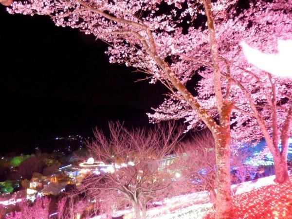 夜桜1_convert_20140406182330
