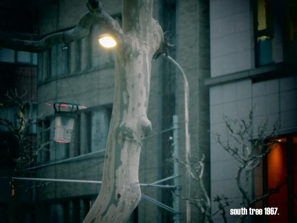 新橋街路樹ブログ用