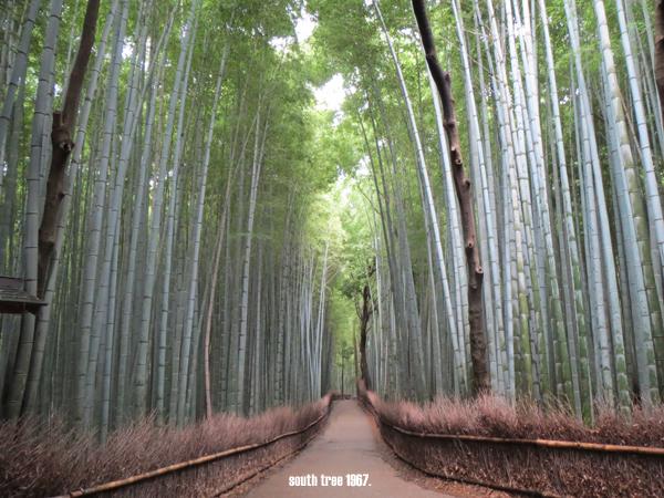 竹林の道ブログ用