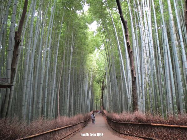 竹林の道元画像ブログ用