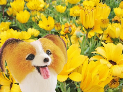 黄色いお花です