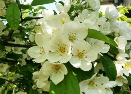 140419_庭先の花