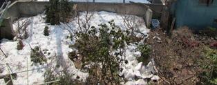 雪が溶けてきた庭