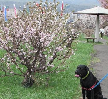 桜とツーショットだって