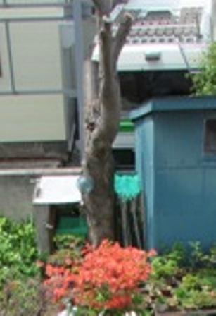 桜の木もみごとに