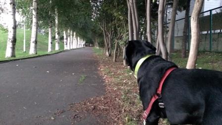 これからお散歩に最適な季節