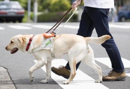 健気な盲導犬たち