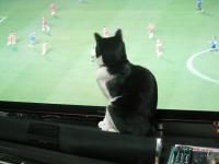 サッカーを見る1