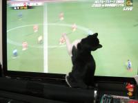 サッカーを見る3