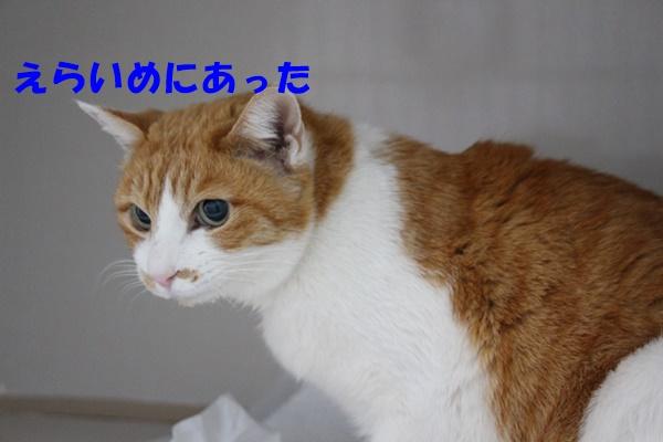 IMG_4098.jpg