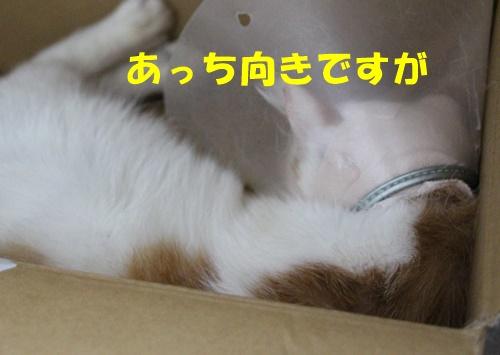 IMG_4338.jpg