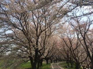 田口不動産 桜が見える