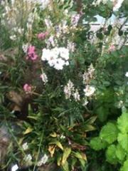 田口不動産夏の花