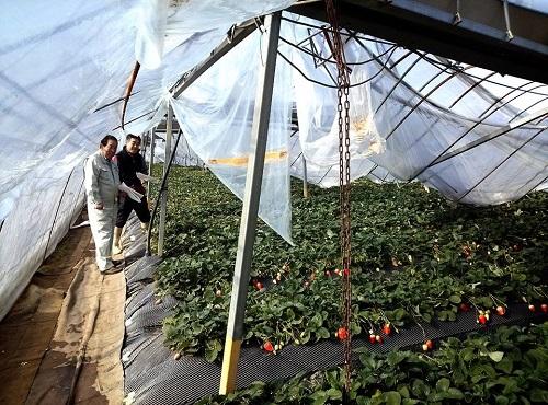 民主党栃木県連≪大雪による農業被害に関する緊急現地調査≫へ!①