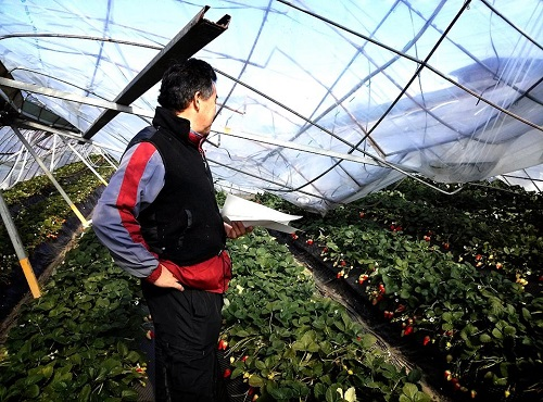 民主党栃木県連≪大雪による農業被害に関する緊急現地調査≫へ!②