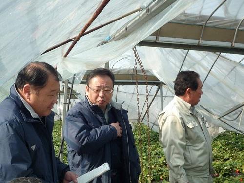 民主党栃木県連≪大雪による農業被害に関する緊急現地調査≫へ!④