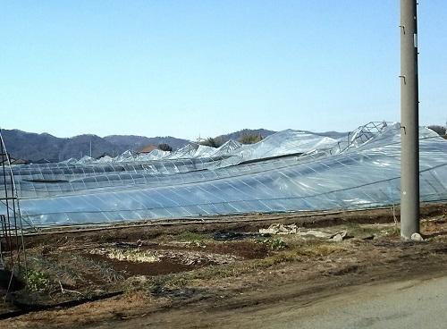 民主党栃木県連≪大雪による農業被害に関する緊急現地調査≫へ!⑤