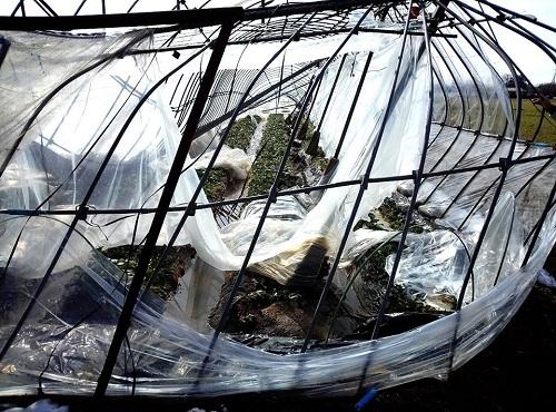 民主党栃木県連≪大雪による農業被害に関する緊急現地調査≫へ!⑥