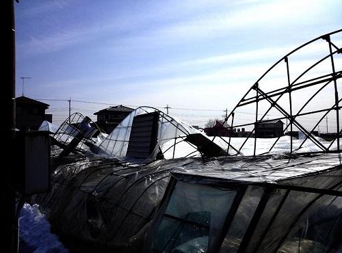 民主党栃木県連≪大雪による農業被害に関する緊急現地調査≫へ!⑦