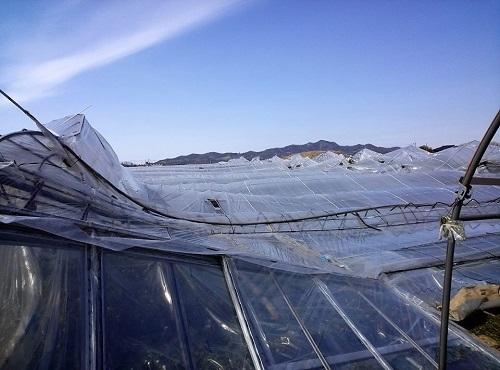 民主党栃木県連≪大雪による農業被害に関する緊急現地調査≫へ!⑪